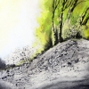 sm-27-oct.-Edge-of-the-woods-8-x-8-in.-watercolour-and-graphite